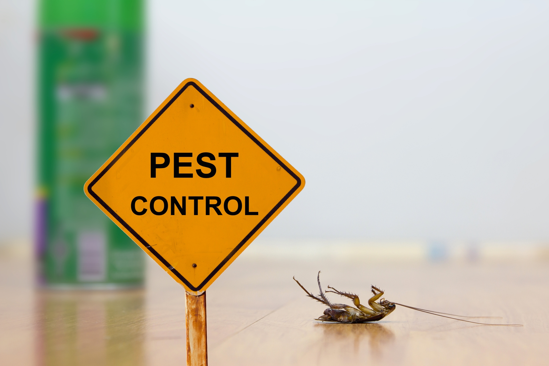 24 Hour Pest Control, Pest Control in Romford, Rise Park, RM1. Call Now 020 8166 9746